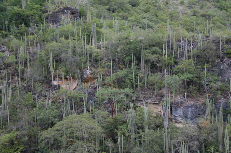 AlipusDestileriasMain-forest